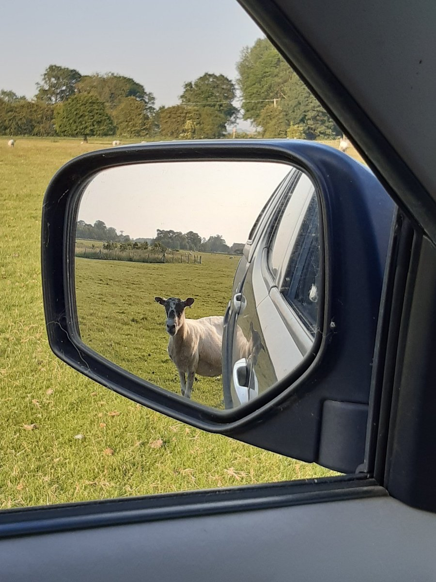 'Through the looking glass' #shepherdess #sheep365 @BurtonConstable #mulespic.twitter.com/mwDxMB4OmE