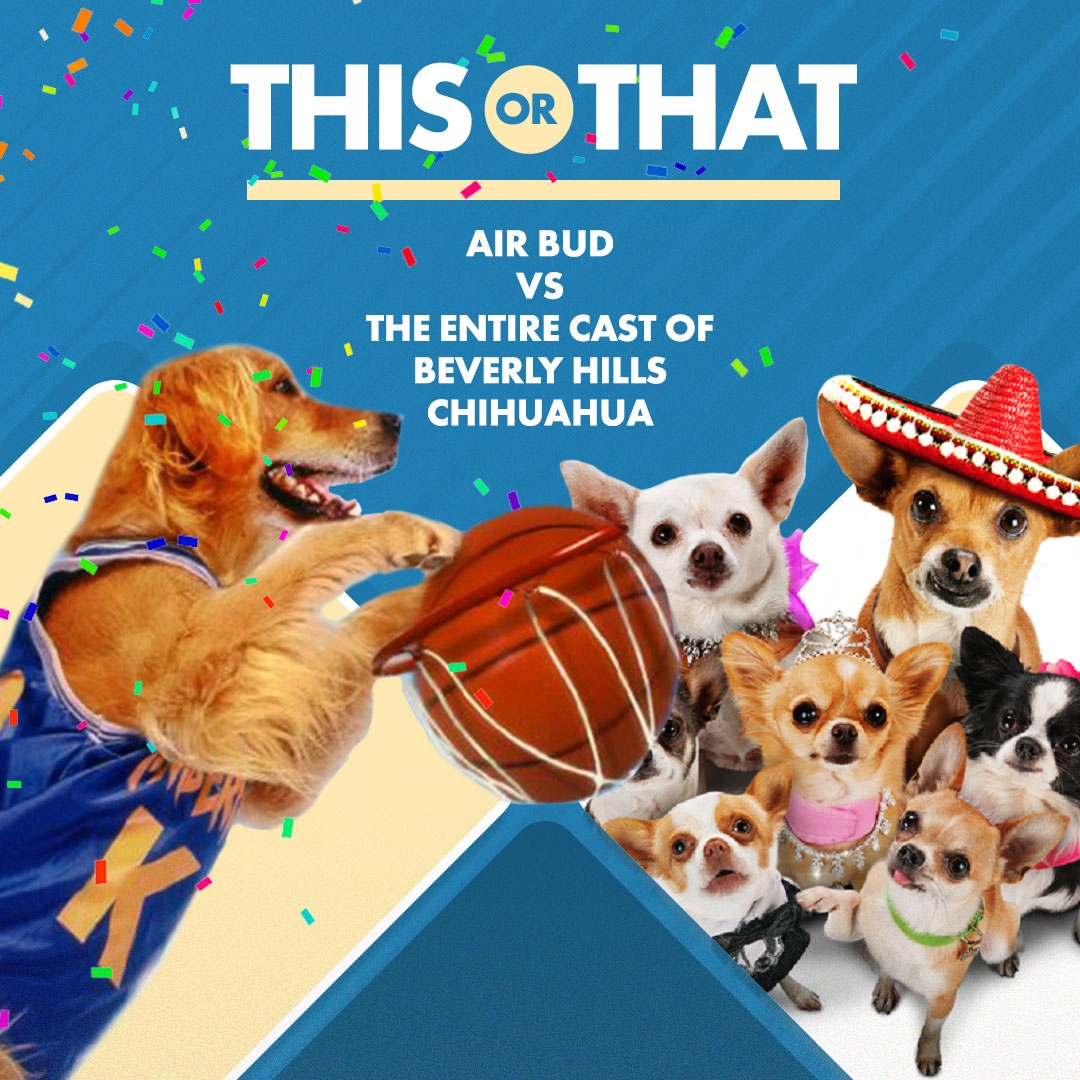 This or That... #movie star #dog edition!  Air Bud vs. the dogs of Beverly Hills Chihuahua — cast your vote in the comments below 🐶 https://t.co/uM1vfy9Jx2