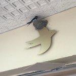 ツバメが巣を作った場所はなんと鳥のマークの看板