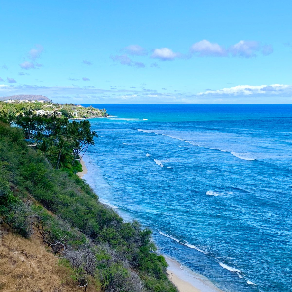💙💚🌏💚💙  #islandview #oceanblue #diamondheadbeach #hawaiilife #hawaii #hilife #hawaiiliving #lovehawaii #surf #surfing #surflife #beachlife #beachgirl #islandlife #aloha #luckywelivehawaii #サーフィン #ハワイ #ビーチライフ #ハワイライフ #ハワイ暮らし #海のある生活 #島暮らし https://t.co/3qvm30WAK8