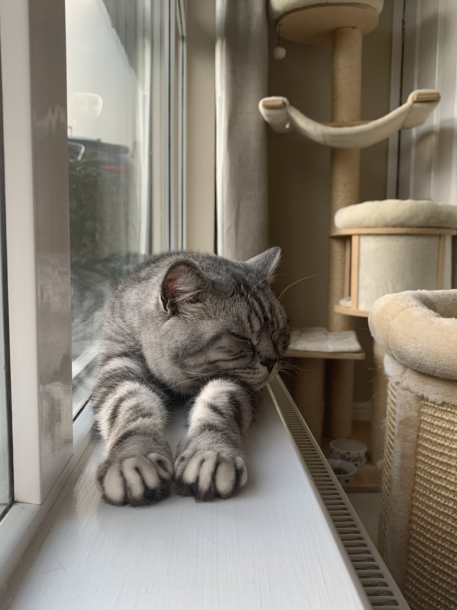 Yes, I have the choice of 7 cat beds to sleep in. Instead I choose my snoozytime on a narrow window ledge. #CatsOnTwitter #cats #naptime #ambassacats #TabbyTroop<br>http://pic.twitter.com/T8Fz4RJfs2
