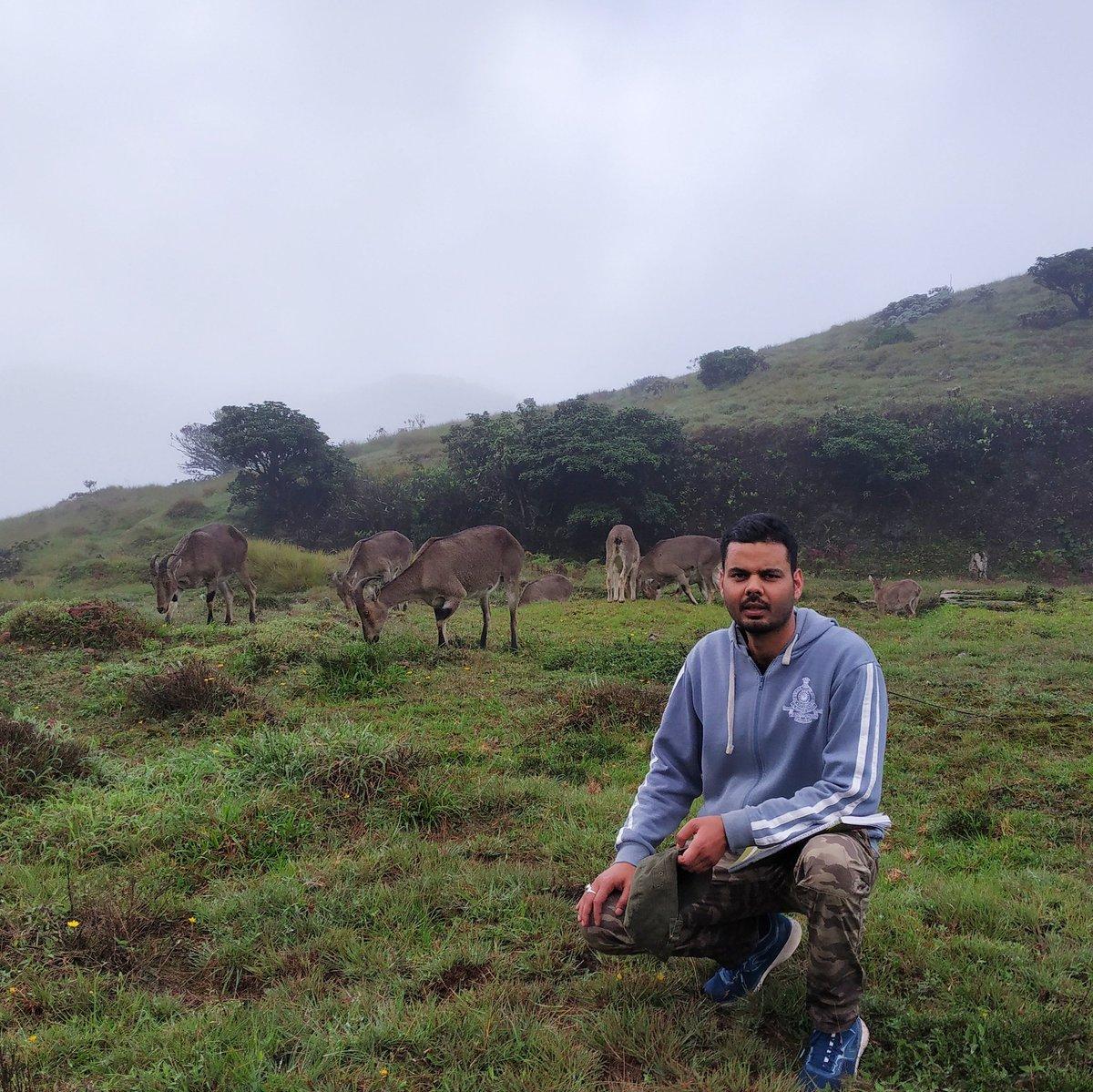 2 days, 40km trek and field inspection in Mukurthi National Park. Lucky to spot endangered Nilgiri Tahr with such close distance. Prized photo 😀  #Nilgiris #nilgiritahr #mukurthi #shola https://t.co/NOf6VVrvlv