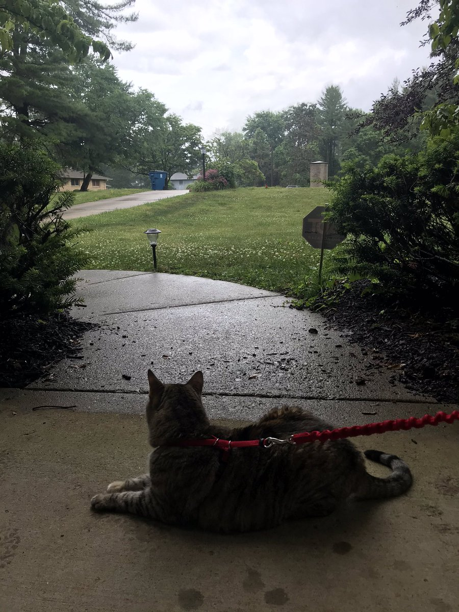 Cool cats know how to handle a big rain storm...