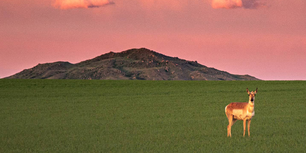 #SunsetSunday on the simple North Dakota prairie. #BeNDLegendary   📷: Kelly Wicks https://t.co/ToSnnd41TN