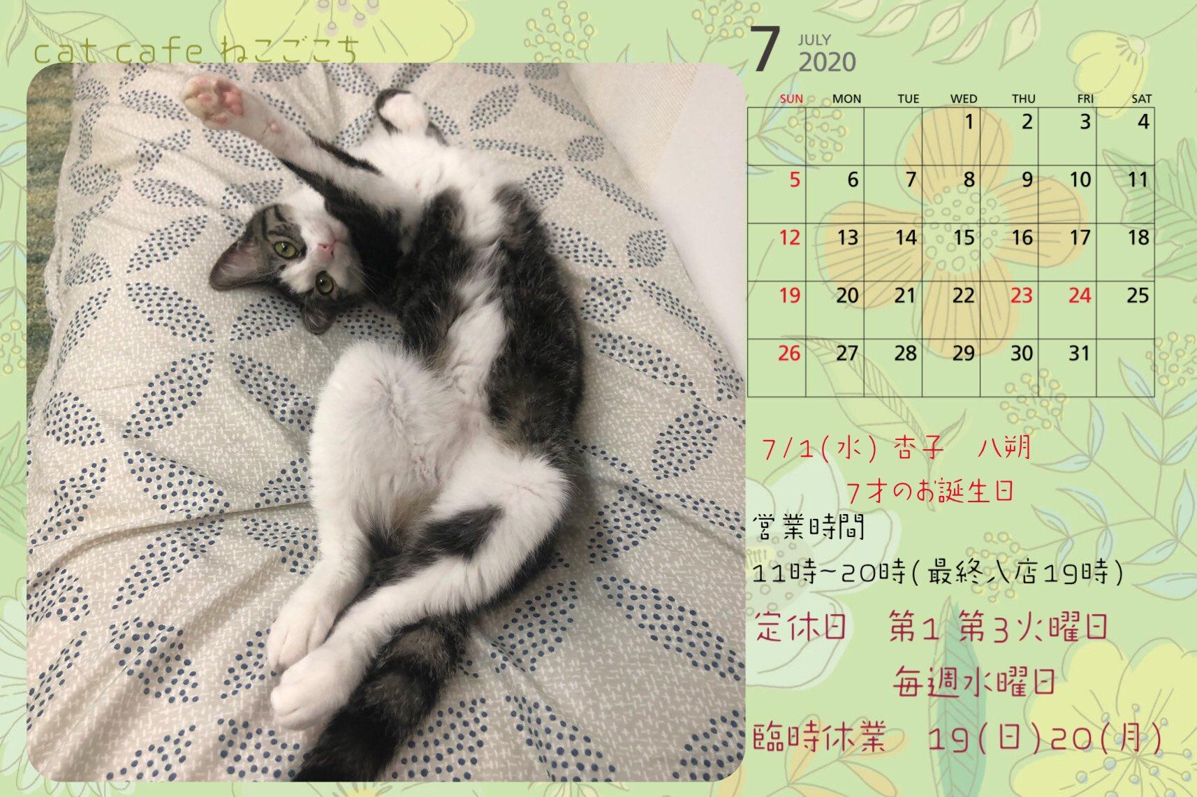 ねこごこち7月営業カレンダー