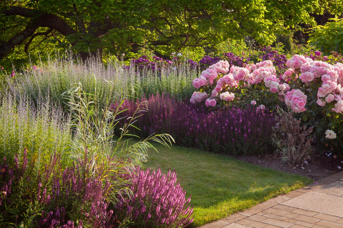 The winding paths in the Bowes-Lyon Rose Garden at @RHSWisley allow you to explore roses alongside an array of herbaceous plants, bulbs and perennials. Summer sees the roses at their spectacular best. #SummerGardenDays Please book online before visiting: rhs.org.uk/gardens/wisley
