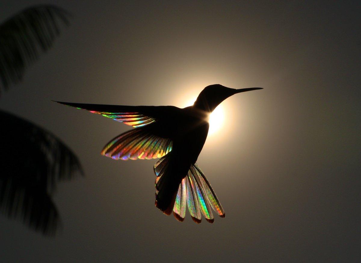 Photographs that capture the rainbow prism-effect of sunlight passing through hummingbirds' wings https://t.co/uWSKjuvF29 https://t.co/S4GATUiK0u
