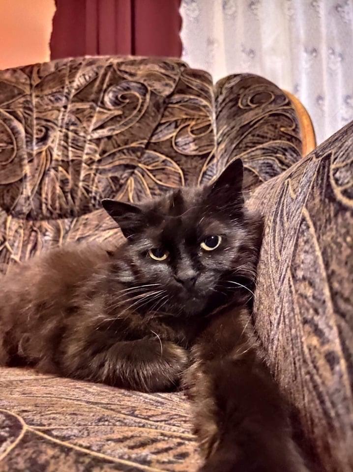 Eine grausame Vergangenheit lässt Minusch nicht ruhen..vermutlich wurde das 7 jährige Mädel misshandelt und geschlagen. Minusch ist eine Angstkatze, die geduldige Hände sucht  #cat #CatsOfTwitter #AdoptDontBuy #rescuecat #catlover #tierschutz #tierheim #animalrescue #catlife pic.twitter.com/73JCLR7RU9  by Ein Herz für Streuner e.V.