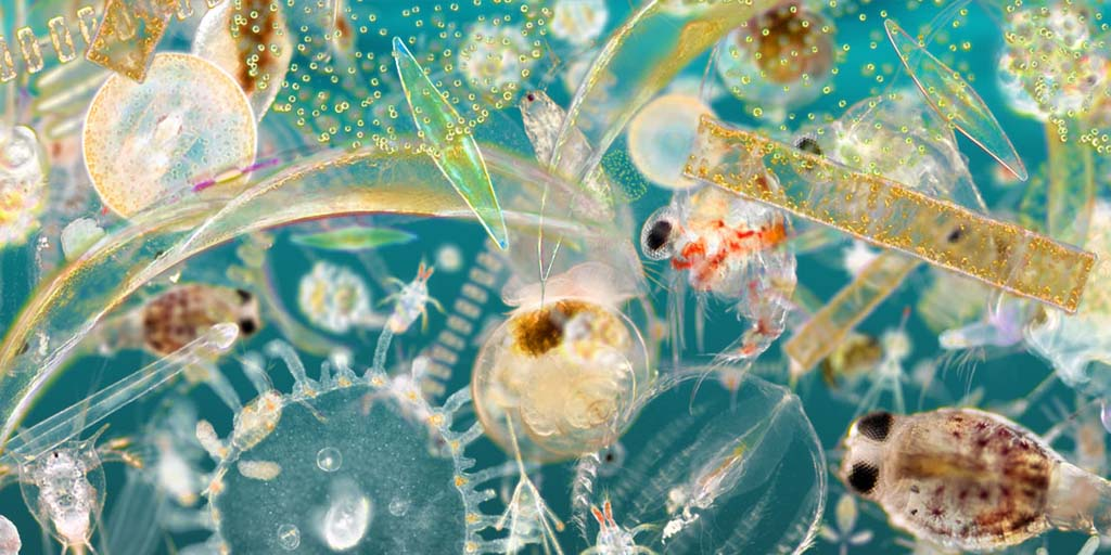 Tomorrow, Tuesday 30th June at ~20.00 GMT, in episode 18 of my Twitter plankton series #DavidAttenborough talks about sea butterflies. Did you even know there were such creatures?, theres one in this picture. First, catch up with episodes 1-16 in my Pinned Thread @zeiss_micro
