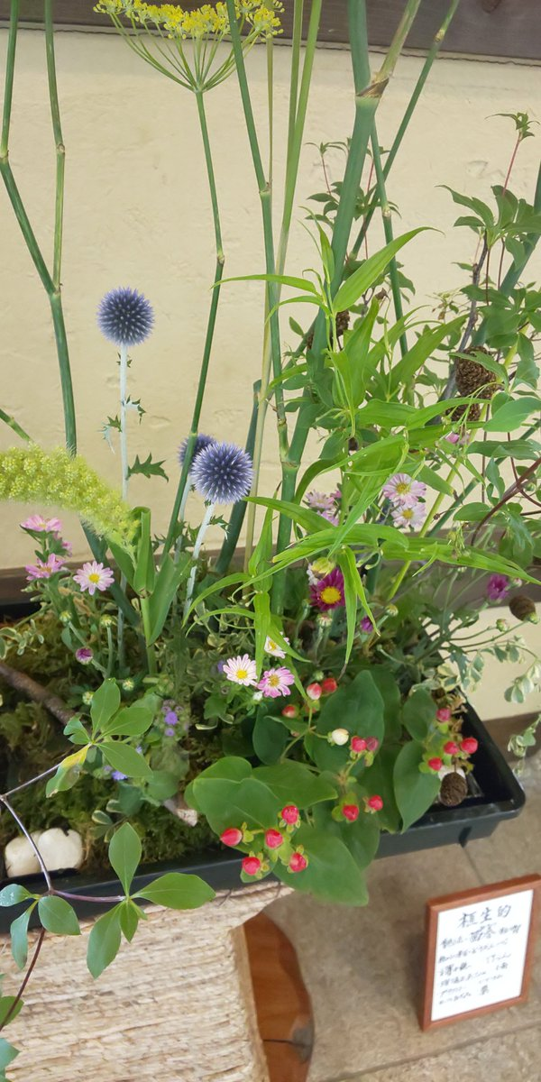 test ツイッターメディア - 今週は自然に花が咲く様子を表現する''植生的''という生け方です。なので今回は花の種類も多く、名前を載せきれない為写真で上げております。梅雨の合間の晴れも今日で終わり、中津川は明日からまた雨続きの予報です…。           #川上屋 #川上屋手賀野店 https://t.co/YpOTYckZeO