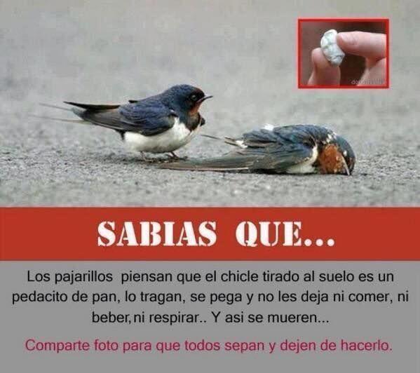 No mates a los pájaros al botar tus chicles al suelo. La basura en su lugar... https://t.co/9WDS9lgDmF
