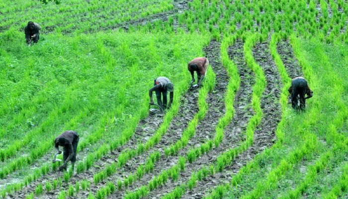 Farming is not just an occupation for the majority of the people of Nigeria, but also, the lifeblood of the North. Northern Nigeria is synonymous to agriculture. However, the insecurity the region is battling with at the moment is hampering any meaningful farming activities. https://t.co/6ZjmtFvo0D