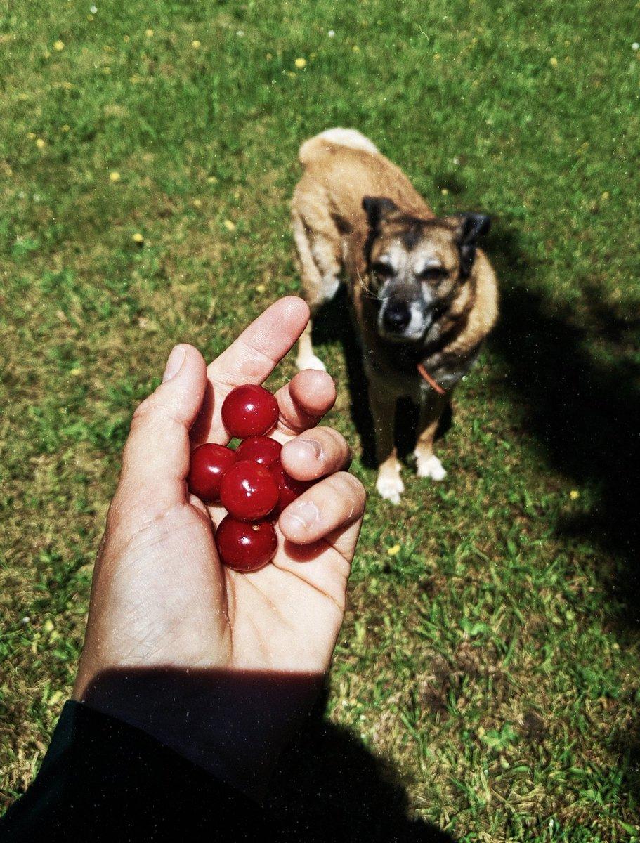 Achja, der Hund grüßt auch recht freundlich und hat heute gelernt, dass er Sauerkirschen eklig findet.  Auf bald! https://t.co/WNux3Kmb9t