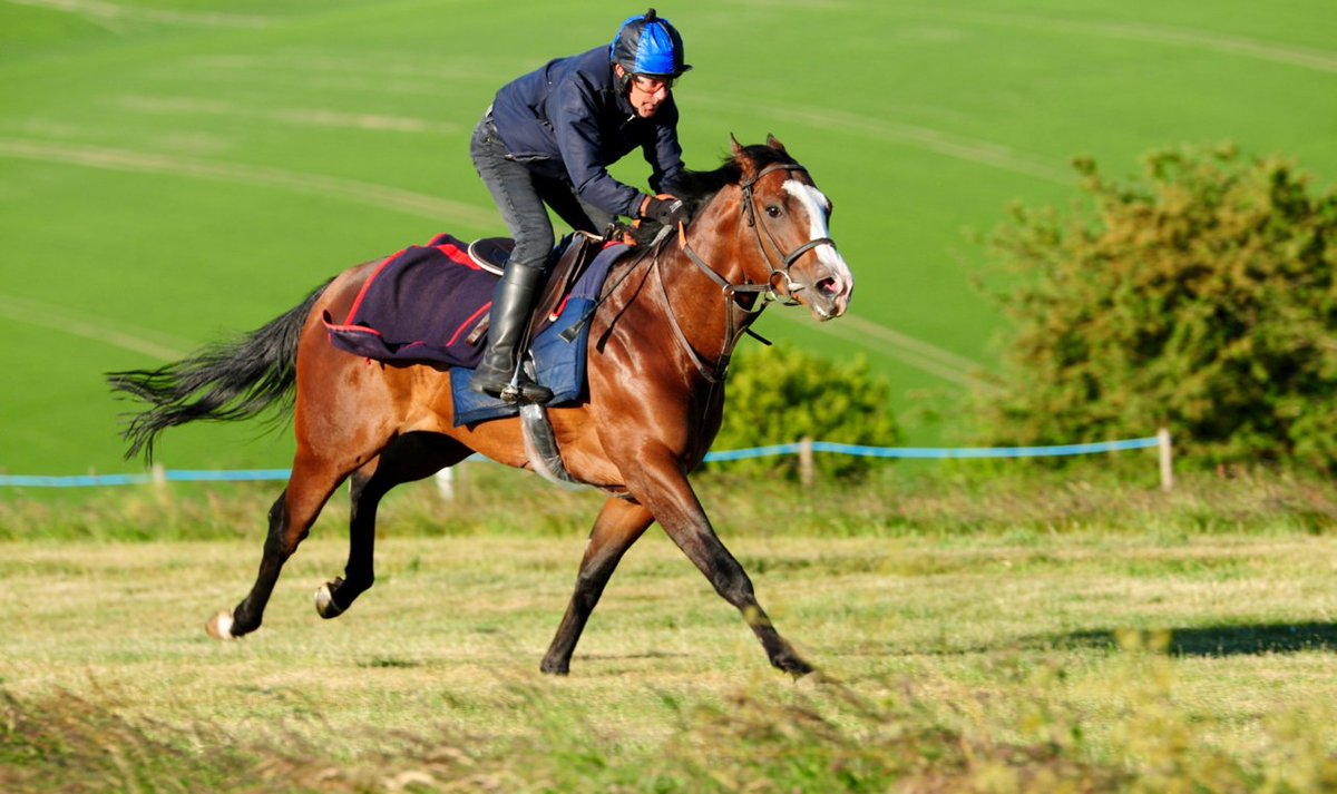 Dual winner Charlemaine (War Command ex Newyearresolution) has his first run this season in the Download The At The Races App Handicap (2.50 pm) at Windsor this afternoon. Jockey David Probert rides him in this 6 furlong contest.