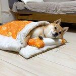 楽天で購入した猫用の布団!使っているのは…ワンちゃん!?