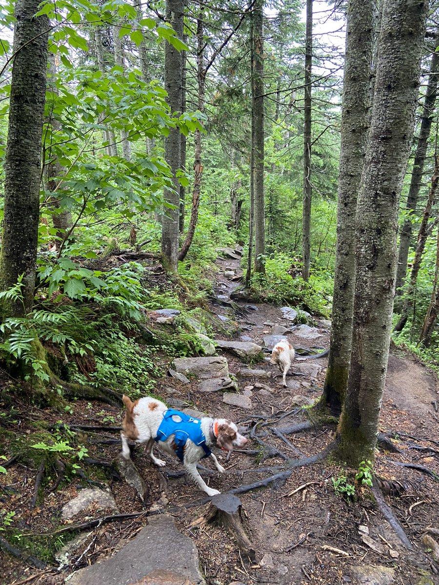 @JohnStantonRR Run - Hike Mont Sainte-Anne - Run for 14 K ... love trail running with my girls. @JohnStantonRR