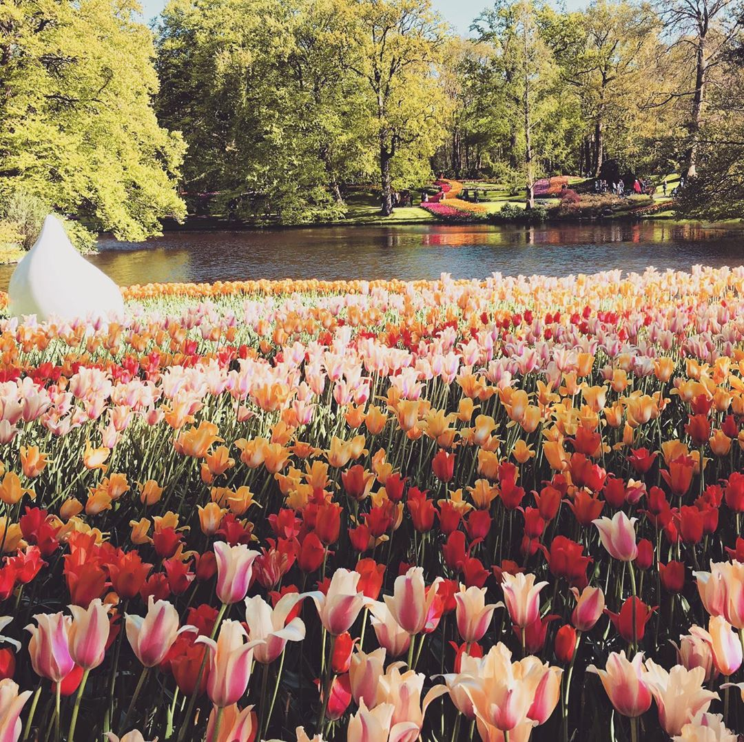 A glimpse back at the tulip-filled parks and gardens of Amsterdam http://instagram.com/g.gio91  #visitamsterdam #hello_worldpics #tulipsofamsterdampic.twitter.com/9T1A6yjoZO
