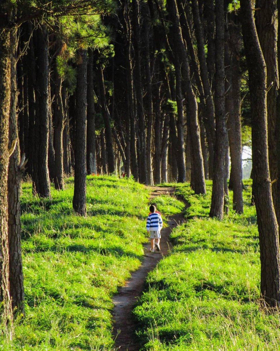 El Parque Miguel Lillo el verdadero pulmón verde de Necochea 🌄🌲  #NecocheaDesdeTuCasa 🏠 #Sentí #Soñá #Viví #Necochea https://t.co/7Abee8BasZ