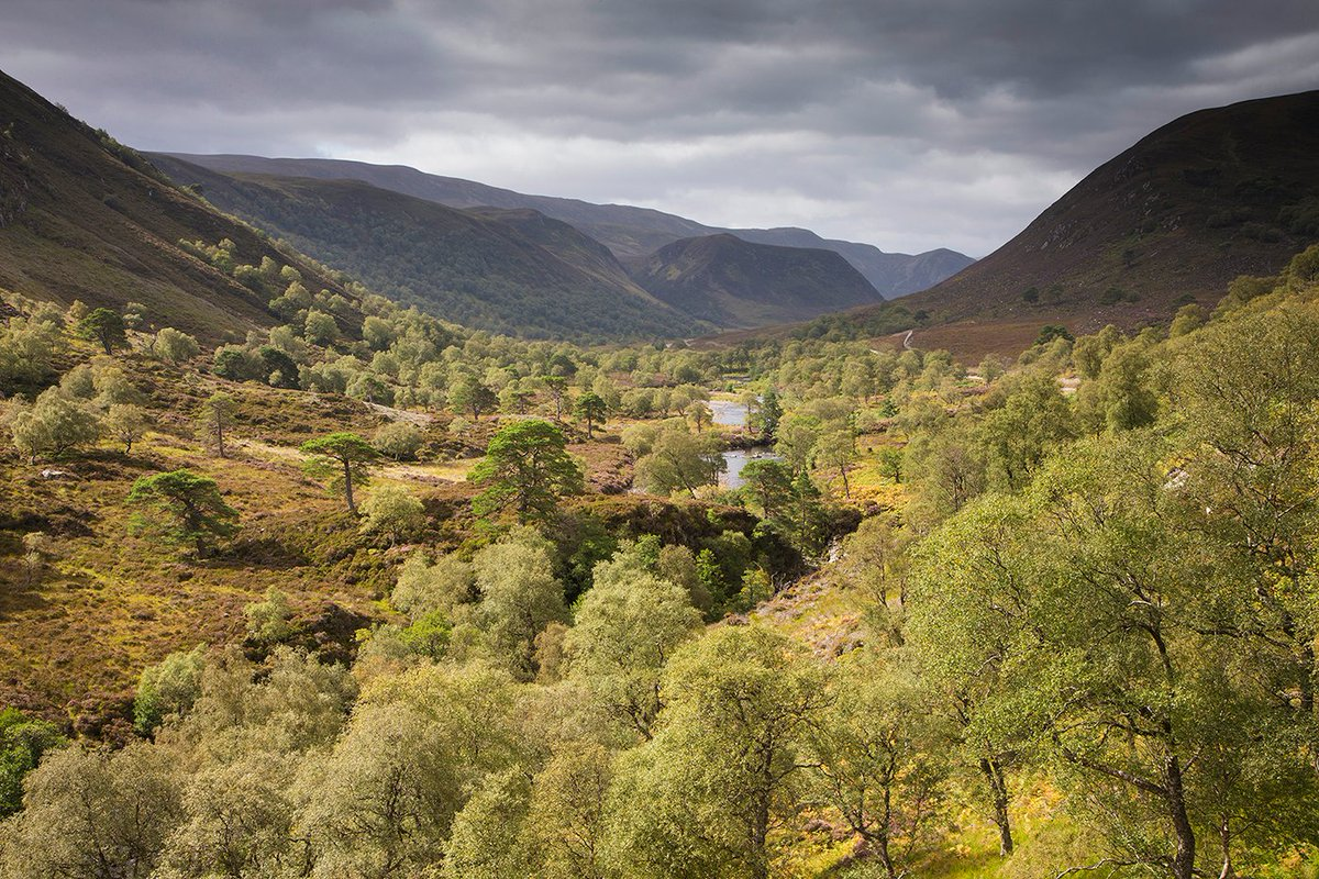 Since 2003, the team at Alladale have been hard at work. Theyve planted close to a million trees, restored over 500 acres of peatland, reintroduced red squirrels & bred Scottish wildcats in a captive breeding programme. Come & see it for yourself in 2021: scotlandbigpicture.com/rewildingescap…