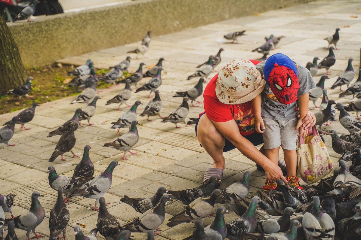 #streetlife #streetactivity #sonyalpha #sonya7iii #streetvision #tamron2875 #sonycamera #sonylens #sonyphotography #a7m3 #tamron #justgoshot #newtaipeicity #taiwan #pigeon #tamsui #streetframe #streetphotography #eclectic_shotz #artofvisuals #shotzdelight #theimaged #lensbiblepic.twitter.com/9gKCRtuFet
