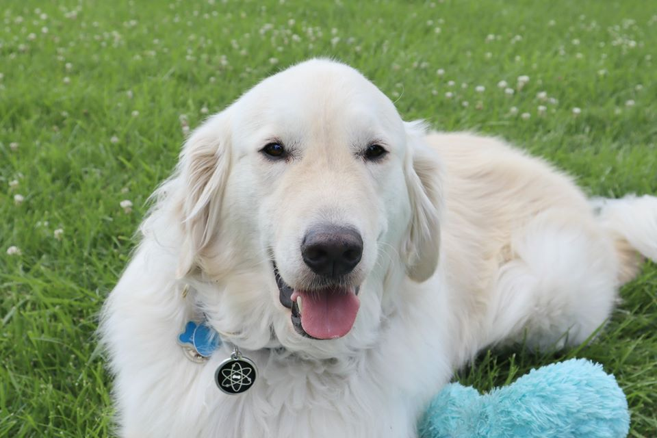 Just in case you need to hear this today...  You are amazing just as you are Just keep being you  Love ~ Sampson the Science Service Doggo  #science #dog #youareloved #youareamazing <br>http://pic.twitter.com/n5OvdmERG5