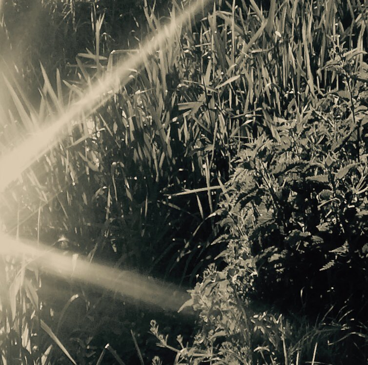 Beauty in Small Things ..Dancing Sunlight. Water. Southdowns. 2019 ©Louise Gardam2020. #wanderingphotographers #photography#cameralove  #forevermagazine #photographers_hub #southdowns #chillwave #artist_features #sunlight #finearttphotographypic.twitter.com/elXIesbF0n