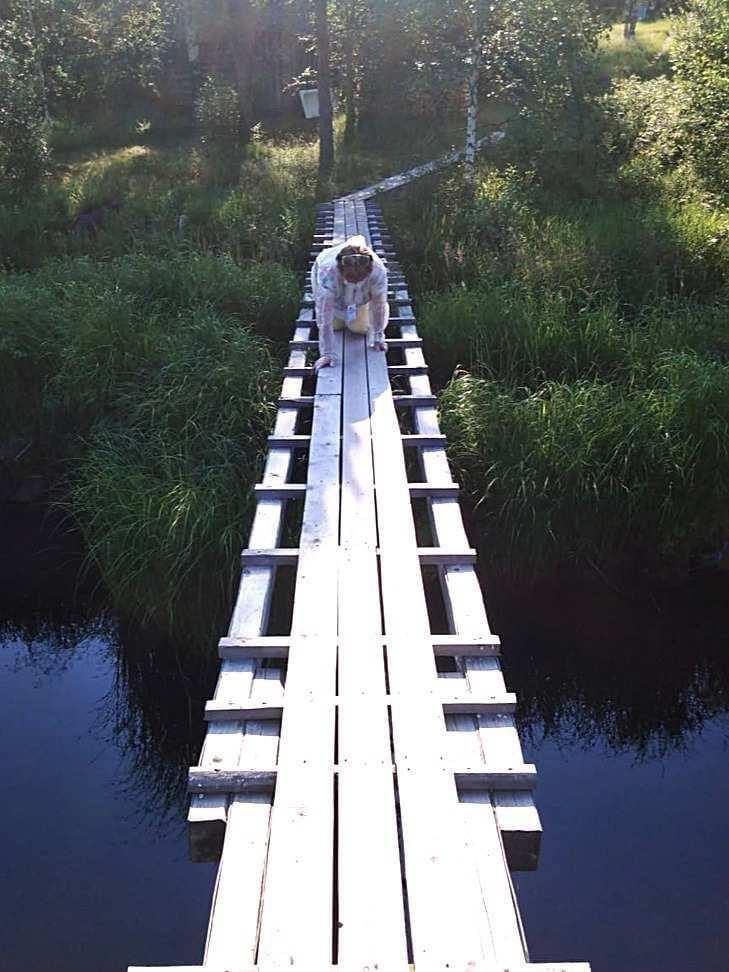 Карелия, деревня Гушкала. Мобильный УИК ползет к редким избирателям. Просто у единственного моста нет перил.  Можно было обойтись перекличкой с двух берегов. Или просто кивнуть https://t.co/PkyFoeBTux