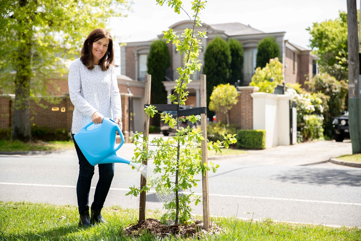 Is your naturestrip looking a bit bare? If you'd like a tree planted on your naturestrip, you can send us a request online & we'll assess whether the space is appropriate & what type of tree would work best for your street 🌲🌴🌳 Click for more info: https://t.co/2xEaEQ0VUF https://t.co/1kLFsUVbK4