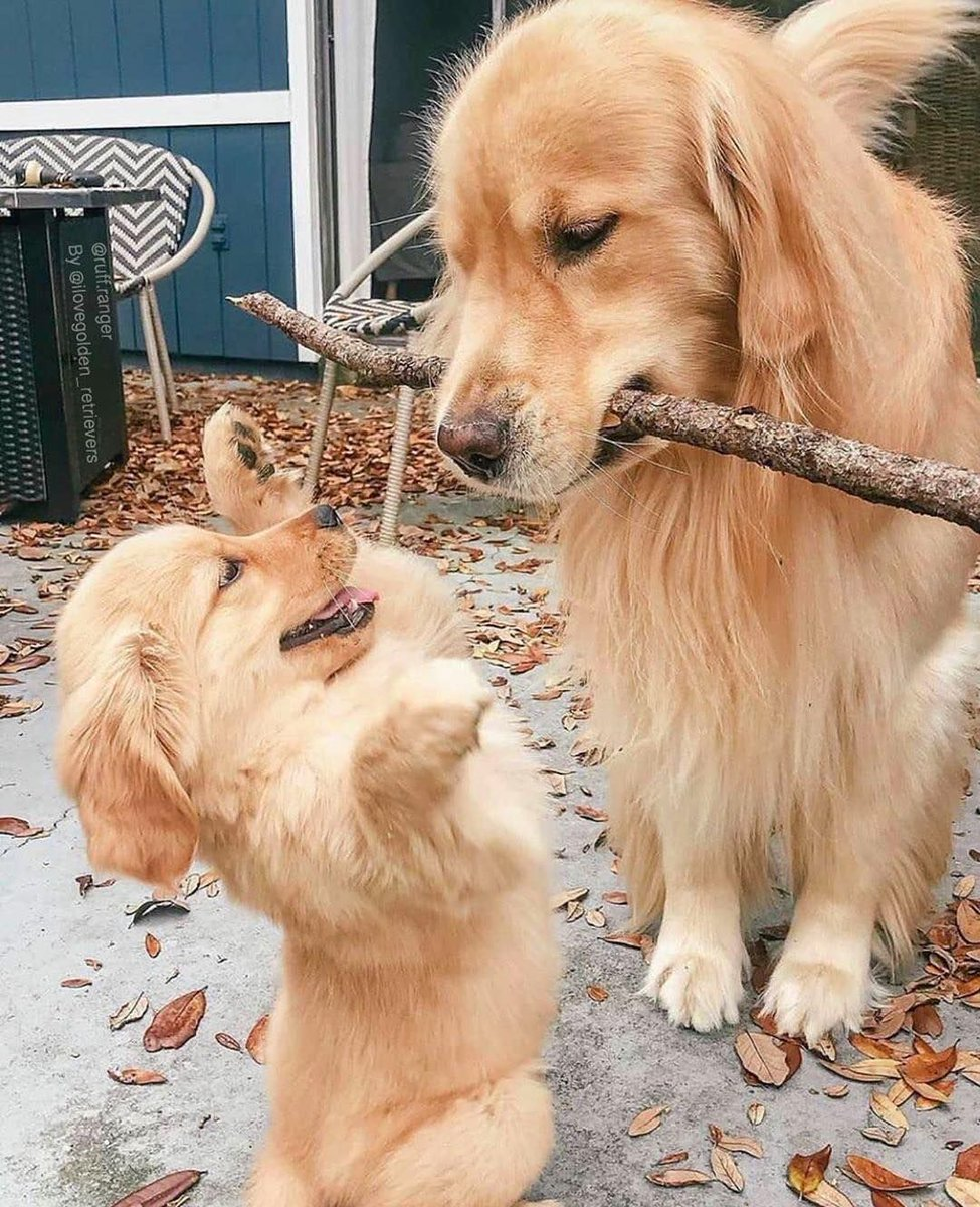 Branch manager & assistant to the branch manager  📸 ruff.ranger   IG https://t.co/ZSNZcqMiyb