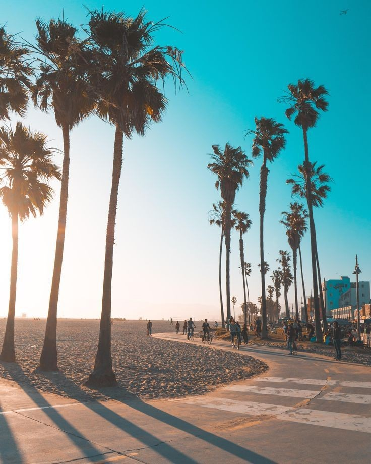 @bobbyraneka ㅤ ㅤ Bike riding in Venice Beach 🚲 ㅤ ㅤ