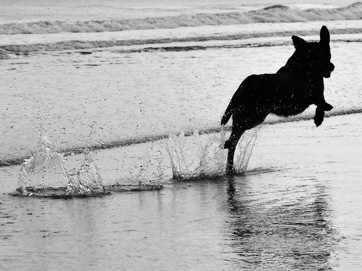 One very happy dog! #blackandwhitephotography #photography #photographyeveryday #Nikon #dailyphotopic.twitter.com/AWFjzMdDaB