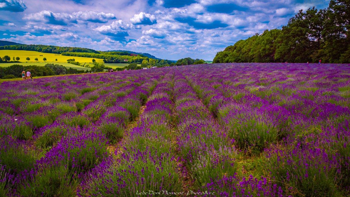 Die Natur gibt, wir geizen. - - - #lavendelfelderfromhausen #lavendel #lavender #hornbadmeinberg #owl #ostwestfalen #nrw #truecolours #beautifulnature pic.twitter.com/r3vhZaEYFp  by LebeDenMoment-PhotoArt