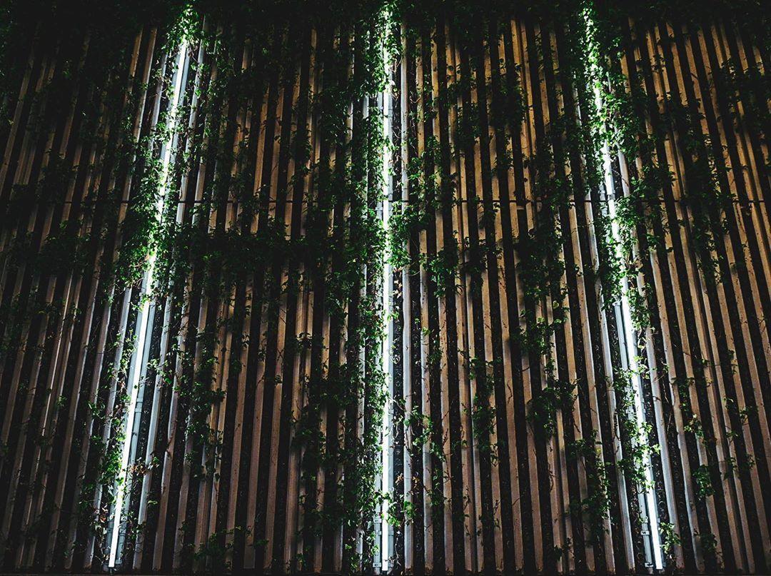 Wood, lights, and ivy on Moa 3rd St. Shinjuku, Tokyo, 2019. • #ivy #lights #nature #shinjuku #kabukicho #tokyo #japan #asia #igersjp #tokyocameraclub #team_jp_ #team_jp #icu_japan #explorejapan #instapassport #thecreative #artofvisuals #aroundtheworldpix #ig_masterpiece #theppic.twitter.com/M0O7OwWRep