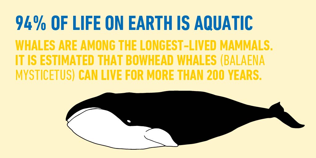 Found almost exclusively in the Arctic and subarctic waters, Bowhead whales get their name from their bow-shaped skull that can reach more than 16.5 feet long, which allow  them to break through the thick Arctic ice: https://t.co/XW6f7DlsXc #WorldOceanMonth https://t.co/ArlGPQn13E