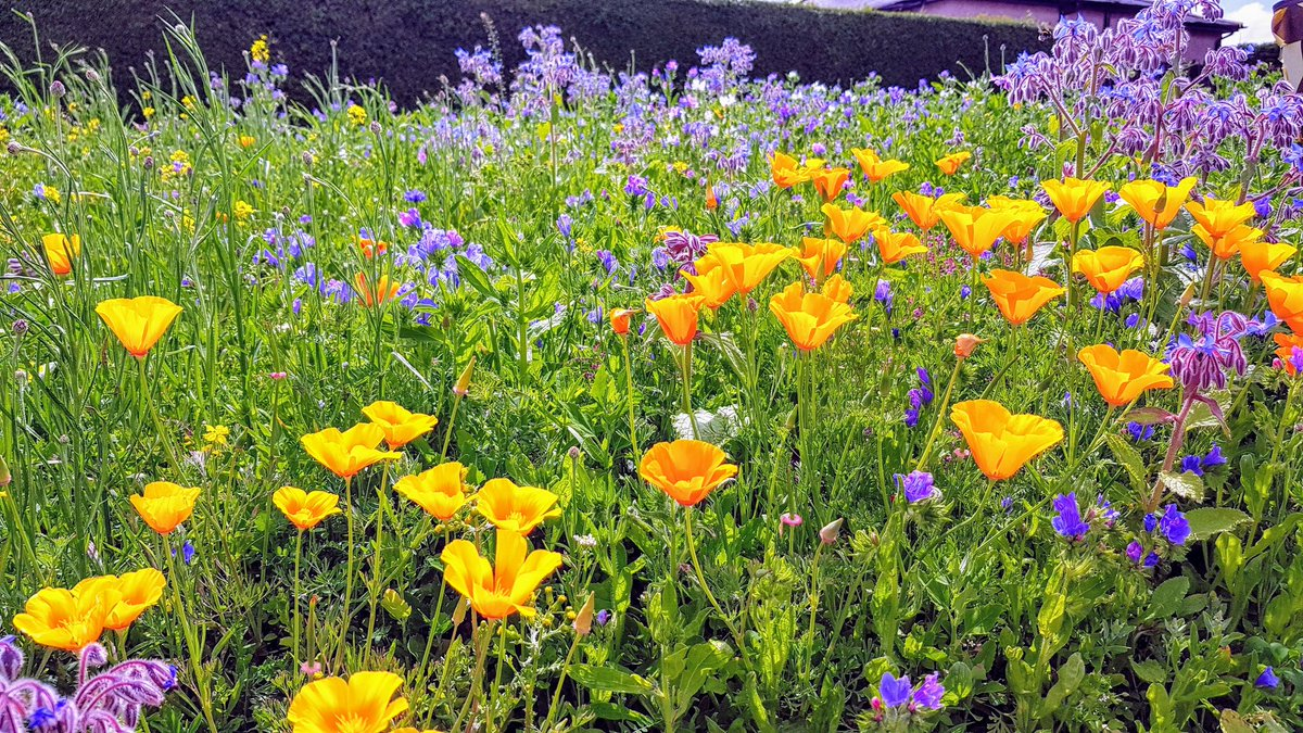 Summer colour by the roadside #summer #June #Flowers #TuesdayThoughts #colour #meadow #outdoors #Scenery<br>http://pic.twitter.com/O0KcVvFgUQ