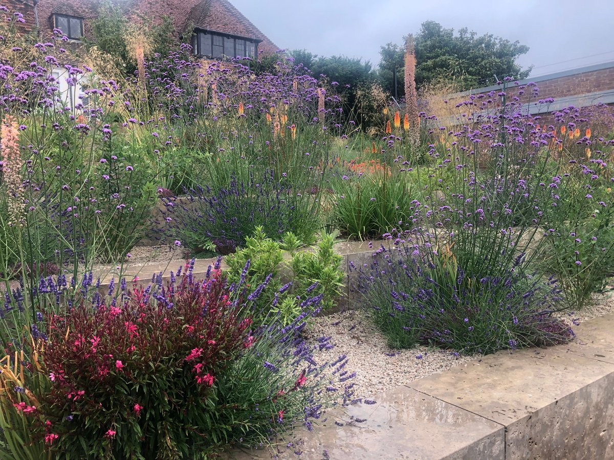 Even on a rainy day like today, the Welcome landscape is bursting with colour and summer interest! Plan your visit rhs.org.uk/wisley