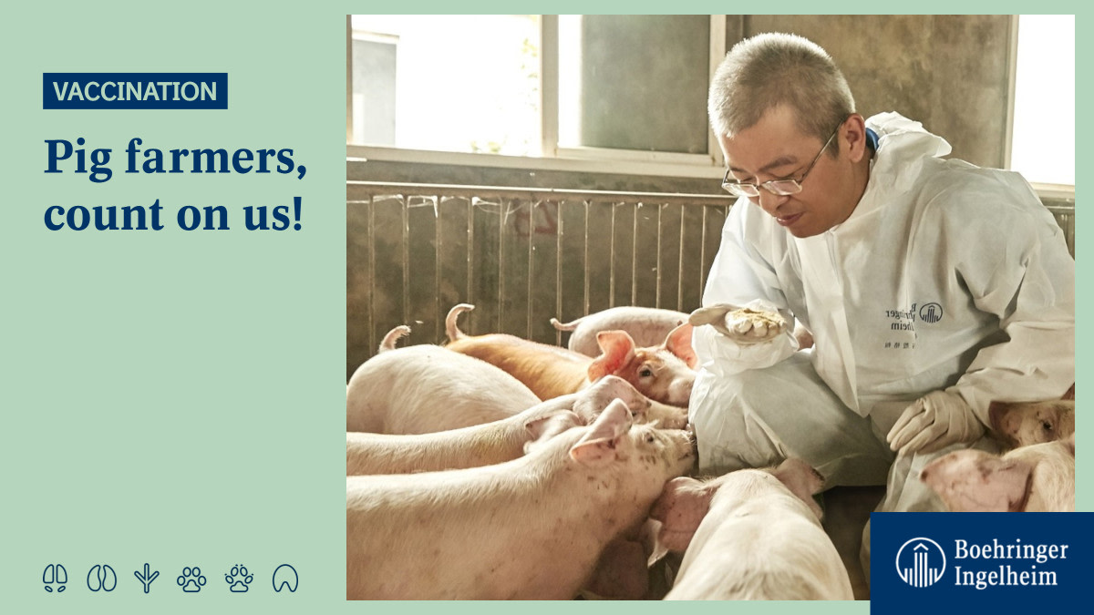 #PigFarmers, listen up☝! Our new classical swine fever #vaccine is now licensed in #China. Check it out here: ➡ https://t.co/Sie7Pscxbs #RealPigFarming 🐷 https://t.co/Fjv15FHhVC