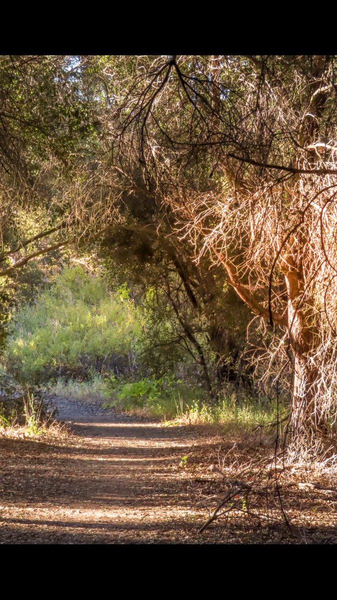 Seeing the Forrest though the trees... . . .   #NatureLover #thebestdestinations #globe_travel #earthofficial #natgeo #nationalgeographic  #naturephotography #vibegramz #killerseqlects #createcommune #theimaged #richardgreenla #pch #santamonicapic.twitter.com/KPtm8hcCqI