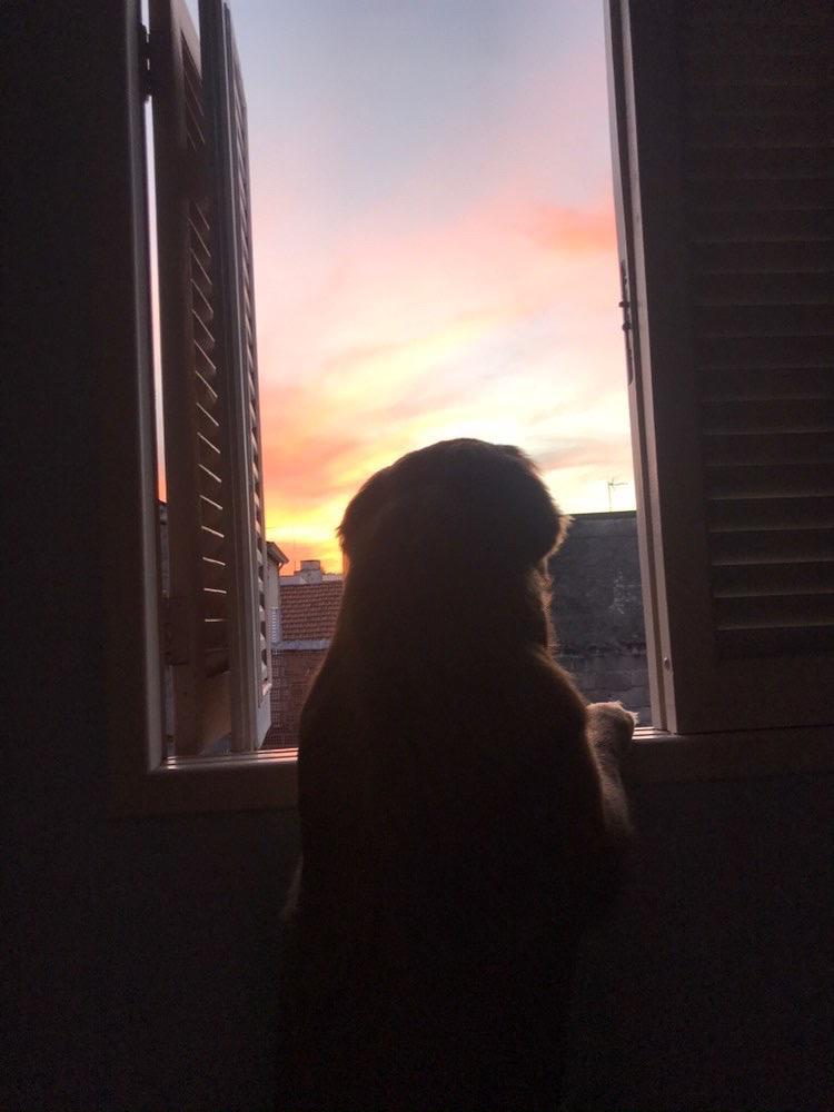 📸 #otempodajanela - Olha só que fofura esse doguinho curtindo o por do sol da janela em São Paulo! A foto é de @victor.prianti. #ficaemcasa https://t.co/agBX1lGRXD