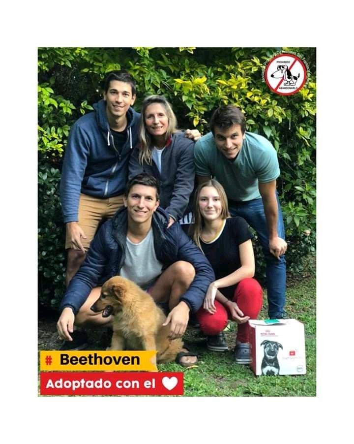 Beethoven adoptado con el❤ Nuestro pequeño Beethoven,ahora Ramón fue adoptado por esta hermosa familia en cuarentena! Feli se comunico con el equipo de adopciones con las ganas de sumar a un integrante y cuando lo vieron se enamoraron! Ramón es super feliz y mimado! Gracias flia https://t.co/GGfUm9pHKq