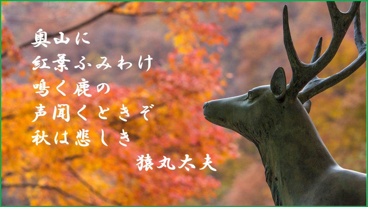 声 鳴く 奥山 に もみじ 悲しき ぞ の 時 は 鹿 聞く 踏み分け 秋