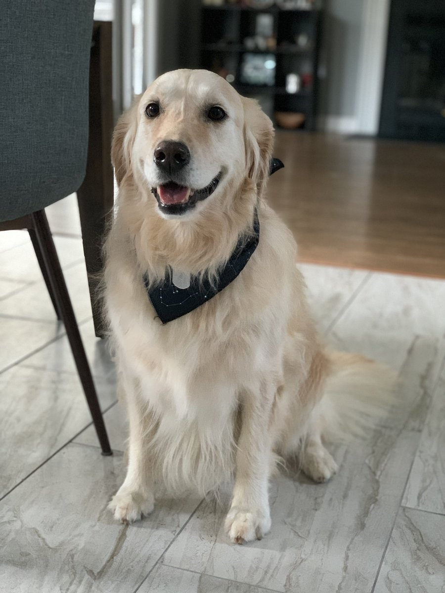 @emayfarris This is Vera, the goodest girl. She's very proud of her new bandana!