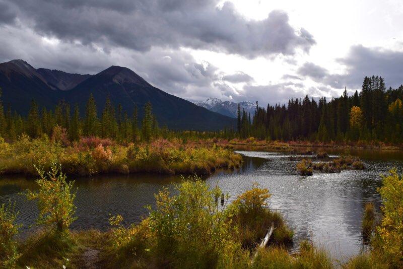 Photographic Artwork for sale at Fine Art America. https://fineartamerica.com/featured/autumn-at-vermilion-lakes-dana-hardy.html… #vermilionlakes #lake #autumn #landscape #naturephotography #artwork #wallart #banffnationalparkpic.twitter.com/rfh84LUpOq