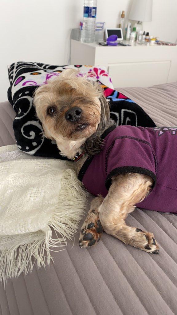 Les suplicó ayuda mi perrito se perdió en la Col. Algarin, se llama Sebastián. Llámenme si lo ven 5513207477. @jrisco @lopezdoriga @vampipe @mhonividente https://t.co/Ef89JRznKJ