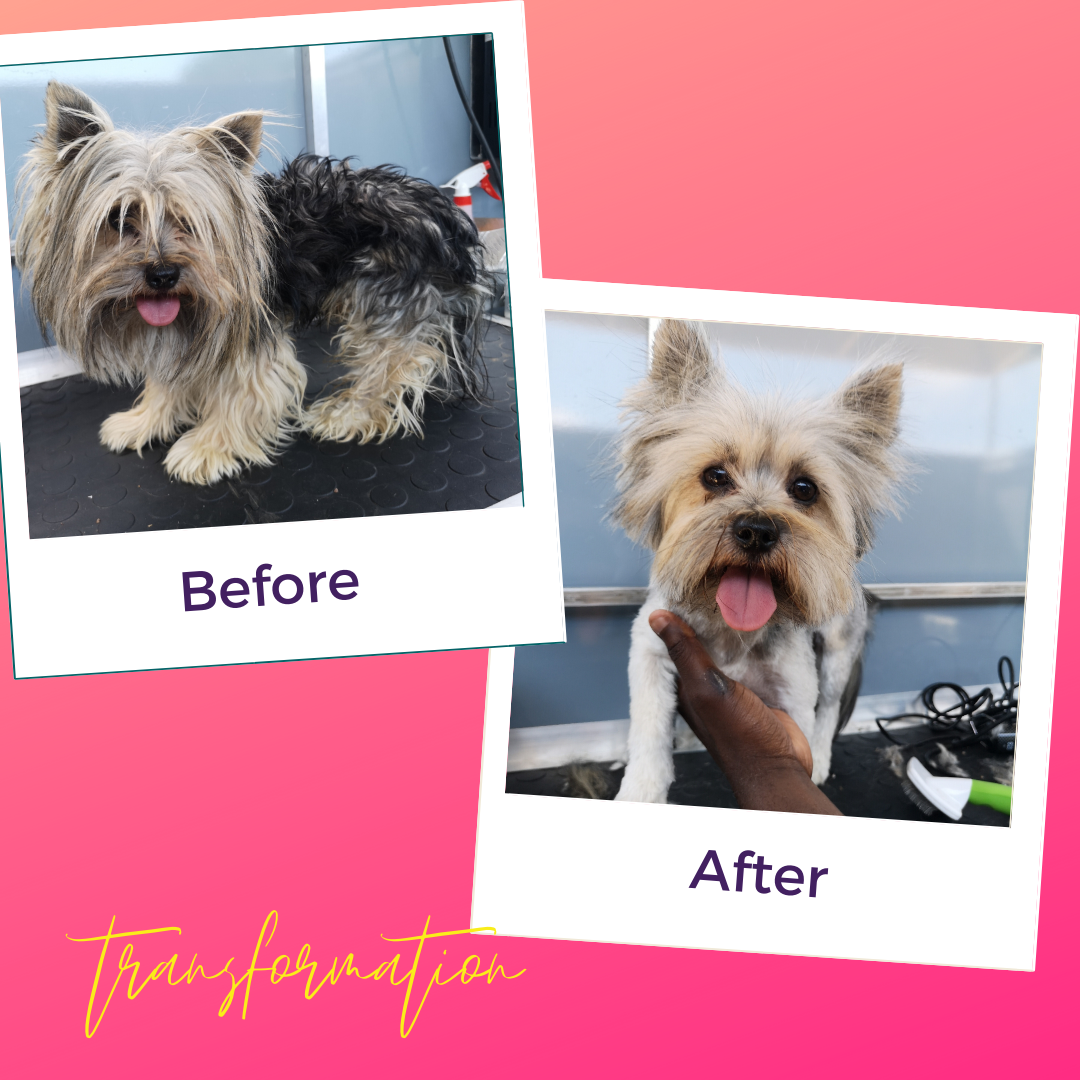 Transformation Tuesday!   This baby went from looking drab to fab. Matted and uncomfortable to being clean and beautiful.  #TransformationTuesday #PuppifyTransformation #Puppify #DogsofSouthAfrica #DogsofJohannesburg #JoburgDogs #DogsofJoburg #DogTransformation #HappyPup