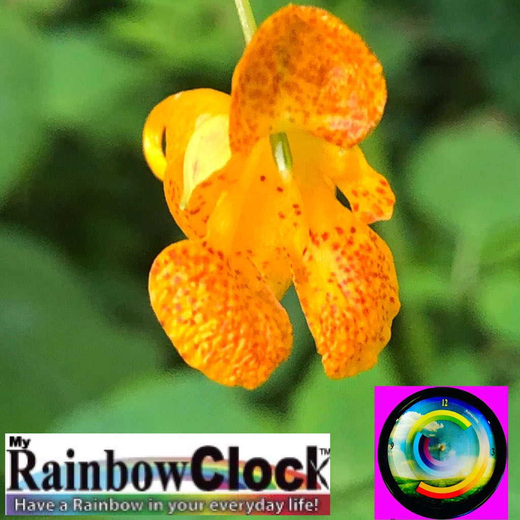 #Small #beautiful & #powerful with #strong & #energetic #colors of #orange & #yellow with a #nicely #calm & #collected #green #background, I couldn't #fined such a #nice #collection anywhere else! Hope you like it. Please notice MyRainbowClock, & tag #friends that may like it!🙏 https://t.co/J1Rdk8ufNO
