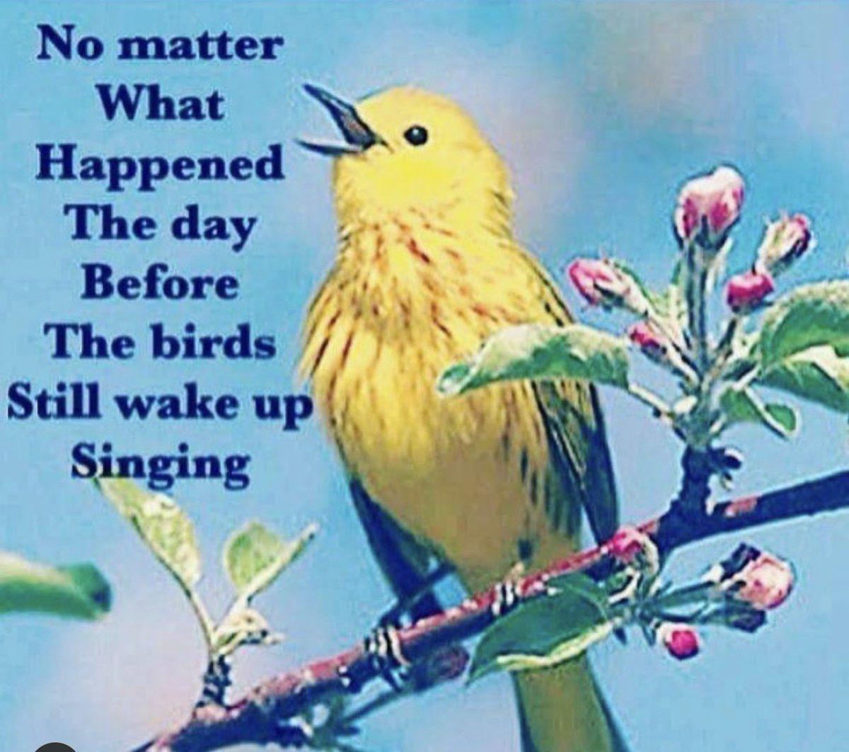 The birds still wake up singing ☀️💙💛💙☀️