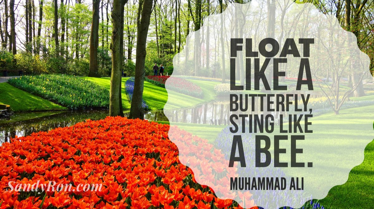 """Interesting quote from Muhammad Ali. """"Float like a butterfly, sting like a bee!""""  #SuccessQuotes #SocialMediaMarketing<br>http://pic.twitter.com/xQy2C46kEL"""