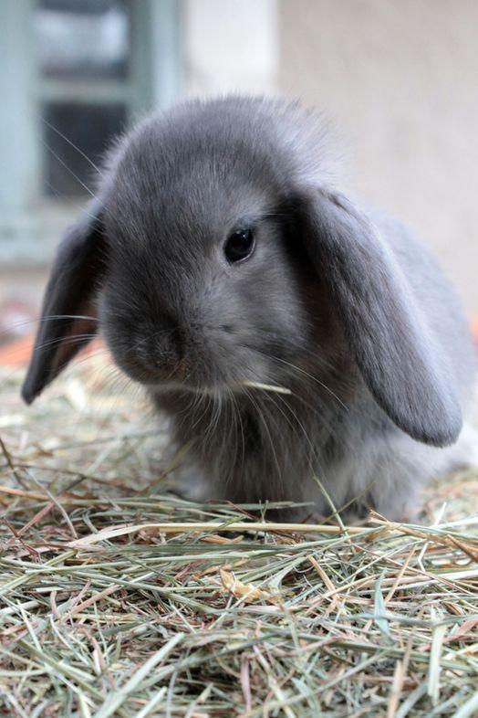 cheap hot altcoins #bitcoin #bunnies pic.twitter.com/vEb5ta1DCB