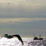 Image for the Tweet beginning: #Noordzee #visserij #kust  Een fijne